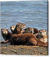 River Otter Family Canvas Print