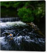 River Wye Waterfall - In Bakewell Peak District - England Canvas Print
