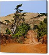 Road On Hierro Canvas Print