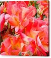 Rose 303 Canvas Print