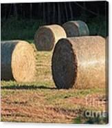 Round Hay Bales Canvas Print