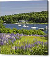 Round Pond Lupine Flowers On The Coast Of Maine 1 Canvas Print