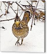 Ruffed Grouse Walking On Snow - Horizontal Canvas Print