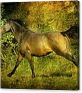 Running Free Canvas Print