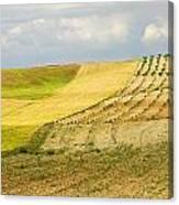 Rural Fields Canvas Print