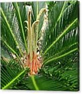 Sago Palm Canvas Print