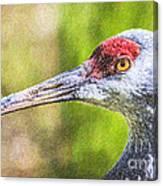 Sandhill Crane Grus Canadensis Canvas Print