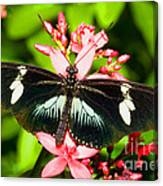 Sapho Longwing Butterfly Canvas Print