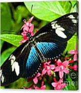 Sara Longwing Butterfly Canvas Print
