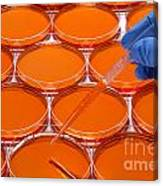 Scientific Experiment In Science Research Lab Canvas Print