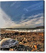 Sea Shell Sea Shell By The Sea Shore At Presque Isle State Park Series Canvas Print