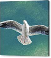 10427 Seagull In Flight Canvas Print