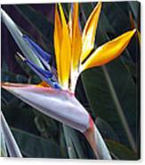 Seaport Bird Of Paradise Canvas Print