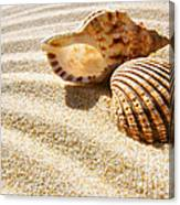 Seashell And Conch Canvas Print