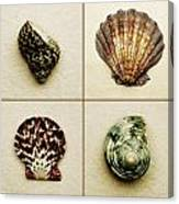 Seashell Composite Canvas Print