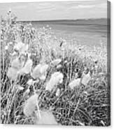 Seaside Grass Canvas Print