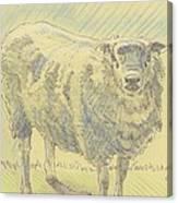 Sheep Sketch Canvas Print
