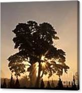 Silhouetted Tree With Sun Rays Canvas Print