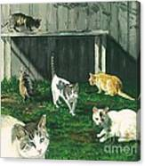 Six Cats Canvas Print