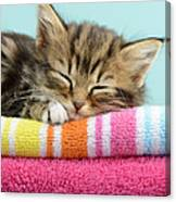 Sleepy Kitten Canvas Print