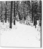 Small Road In A Snowy Forest Canvas Print