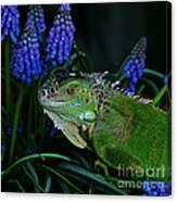 The Night Of The Iguana Canvas Print