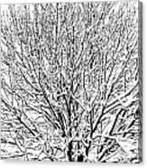 Snow Cover Canvas Print