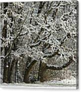 Snow On Trees Canvas Print