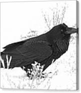 Snow Raven Canvas Print