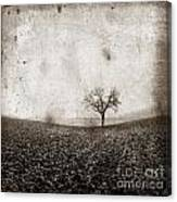 Solitary Tree In Limagne Landscape. Auvergne. France Canvas Print