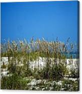 Sowing Wild Oats Canvas Print