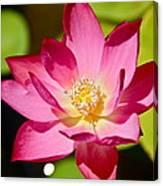 Sparks Lotus Canvas Print