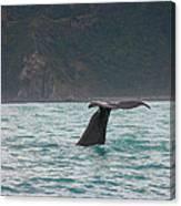Sperm Whale Diving  Canvas Print