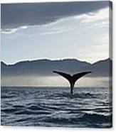 Sperm Whale Physeter Macrocephalus Canvas Print