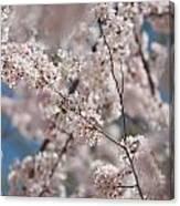 Spring Bloom Canvas Print
