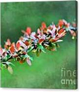 Spring Raindrops On Leaves - Digital Paint Canvas Print