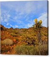 Springtime In Arizona Canvas Print