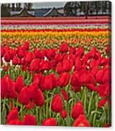 Springtime Tulip Field Art Prints Canvas Print