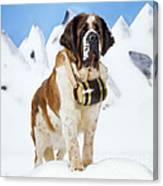 St. Bernard Dog Canvas Print