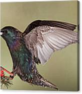 Stanley The Starling Canvas Print
