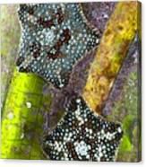 Starfish On Neptune Grass Canvas Print