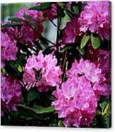 Still Life At North Puffin - Rhododendron With Butterfly Canvas Print