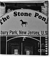 Stone Pony Canvas Print