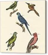 Strange Climbing Birds Canvas Print