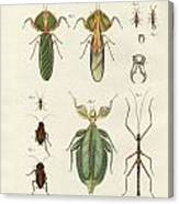 Strange Insects Canvas Print