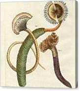 Strange Worms Canvas Print