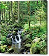 Stream Flowing Through A Forest, Usa Canvas Print