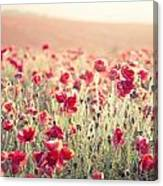 Stunning Poppy Field Landscape Under Summer Sunset Sky With Cros Canvas Print