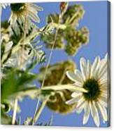 Summer Flowers And Sky Canvas Print