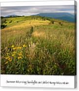 Summer Morning Sunlight On Little Hump Mountain Canvas Print